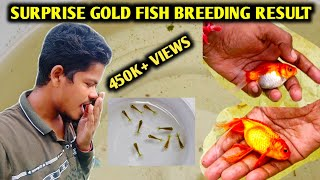 Suprise goldfish breeding   Goldfish breeding   Goldfish fry care   Tamil