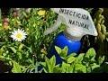 Insecticida ecológico de ajo