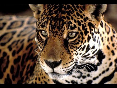 Documental Animales en