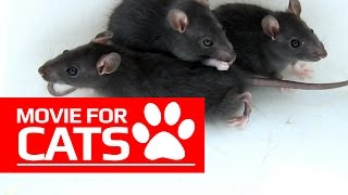 MOVIE FOR CATS - 🐭 BLACK RATS (ENTERTAINMENT VIDEOS FOR CATS TO WATCH)