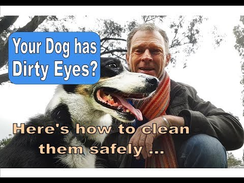 How to clean your dog's eyes and make your own saline eye wash.