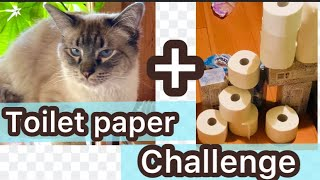 A cat's toilet paper challenge! Let's see how high my Balinese cat can jump!