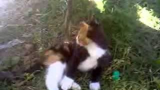 Милый Котэ =) ( Nice & Funny Belarus Cat )