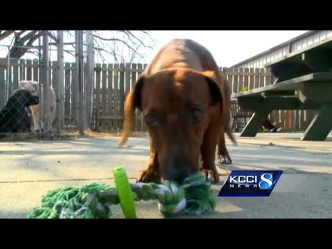 Malnourished puppies crowd pet rescue
