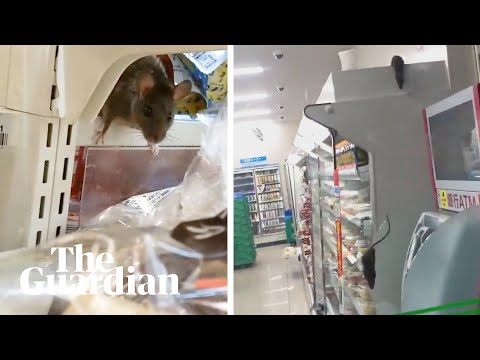 Cierran una tienda de Tokio tras hacerse viral un vídeo con ratas