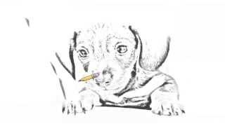 Auto Draw 2: Dachshund Puppy