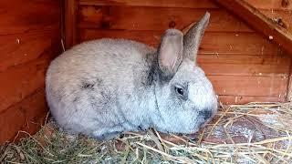 БСС. Супер кролики! Мой взвешенный и окончательный выбор!