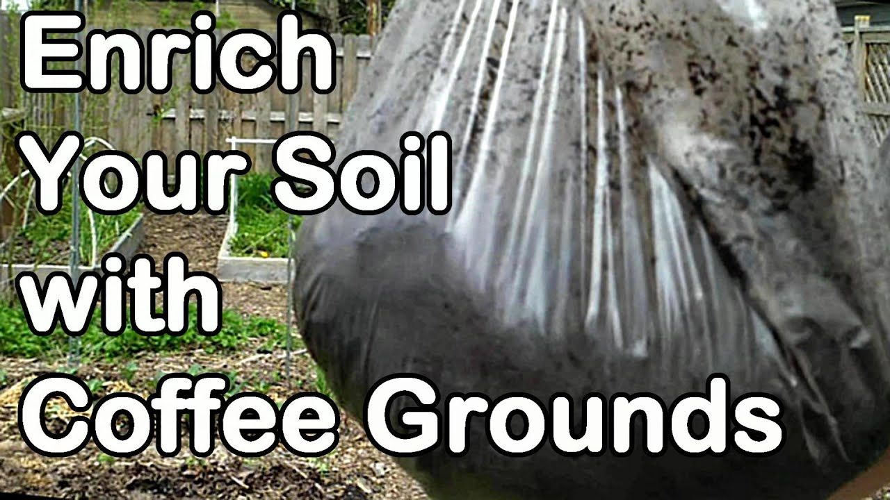 Enrich Your Garden With Used Coffee Grounds And My 2013