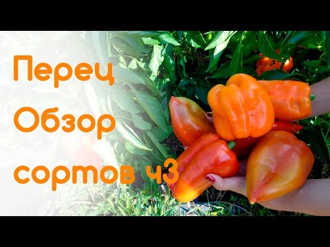 Сладкий перец Обзор урожайности в биологической зрелости Ч3