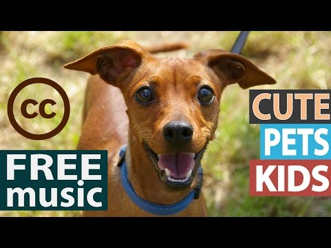 Baixar royalty free music free of charge - Download royalty