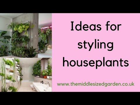 Ideas and tips for styling houseplants