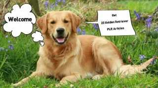 Dog| 25 Golden Retriever Dog |plr| Articles |videoscribe|