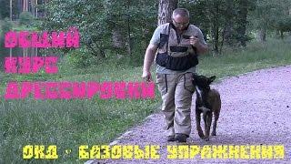 Дрессировка собак.  ОКД - базовые упражнения