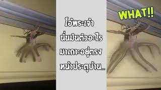 เจอแบบนี้ถ้ามันเข้าไปในบ้าน-ย้ายออกเถอะ-รวมคลิปฮาพากย์ไทย