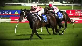 Black Caviar All 25 Wins