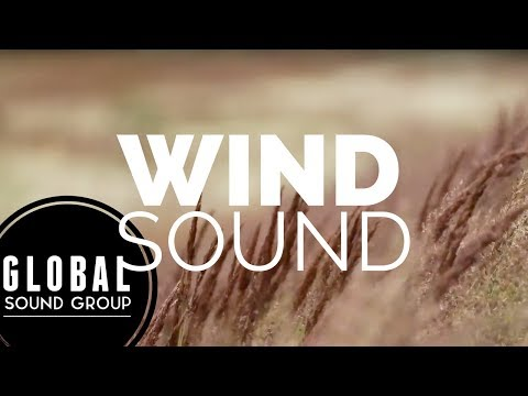Wind Whistling Through Trees | Wind To Calm Down | Late Night Music | ☆46