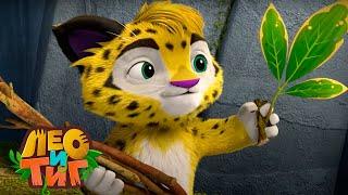 Лео и Тиг — Маленький хитрец — Серия 49| Мультики для детей