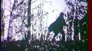 ДДТ - Предчувствие Гражданской войны (клип, 1989?)