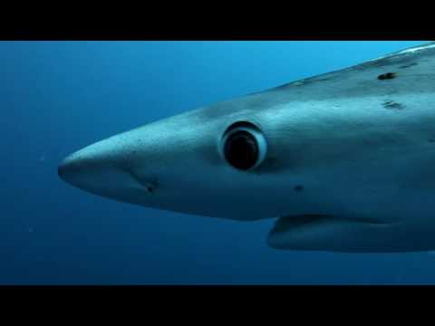 Episode VI  - Offshore dive - False Bay - South Africa