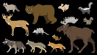 north american forest mammals forest animals the kids picture show fun educational