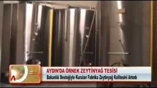 Aydın'da örnek zeytinyağ tesisi