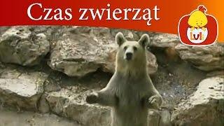 Czas zwierząt - Niedźwiedź + Hipopotam, dla dzieci Luli TV - Videos for babies