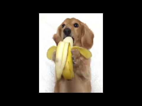 Cute Puppy Eating A Banana Youtube