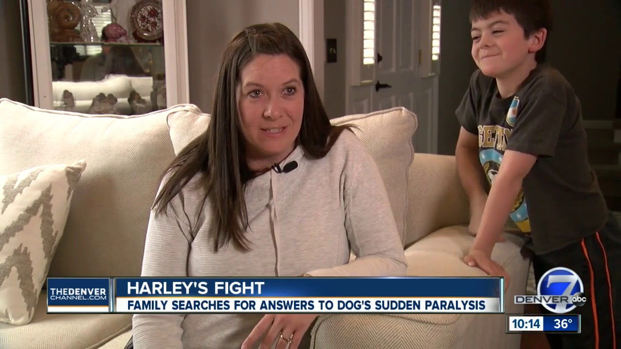 Centennial family looks for a cure after their dog loses use of his hind  legs
