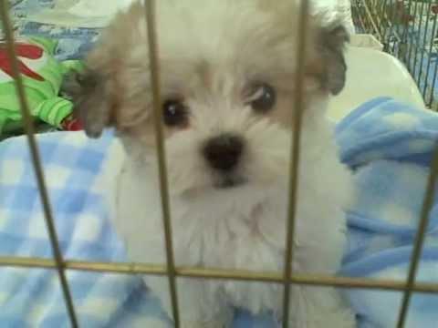 Petsmart Visalia Dog Training