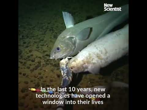Life in the Deepest Places on Earth