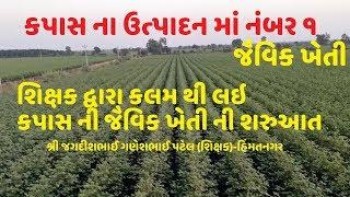 કપાસ ના ઉત્પાદન માં નંબર ૧ જૈવિક ખેતી પદ્ધતિ દ્વારા /Organic Farming