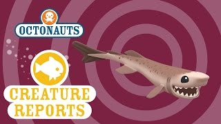 Octonauts: Creature Reports - Cookiecutter Shark