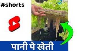 गजब खेती पानी पे🔥🔥 #Shorts #indianfarmer #santoshjadhav