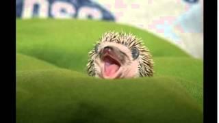 смешные животные мира(funny animal world)