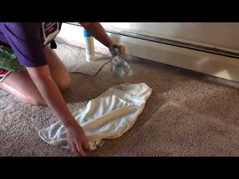 How to get dents out of your carpet!
