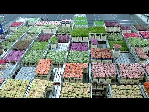 Крупнейший рынок цветов готовится ко Дню Валентина (новости)