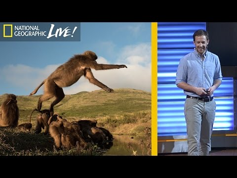 The Fascinating Lives of Bleeding Heart Monkeys (Part 3) | Nat Geo Live