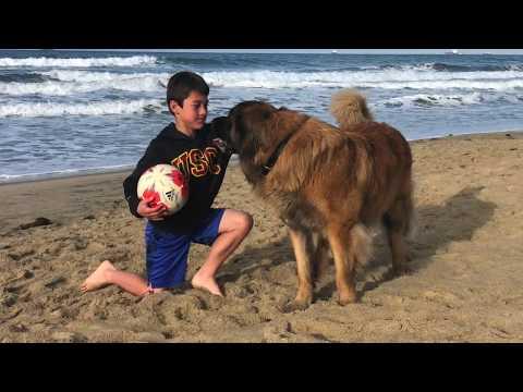 A Boy & His Leonberger