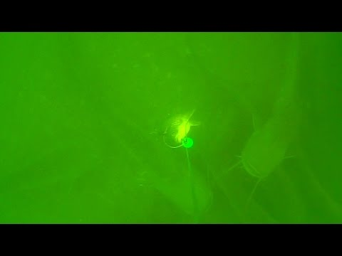 Silures au Fireball Dam Madcat Snap-On Vertiball Rig Float vif (Carassin)