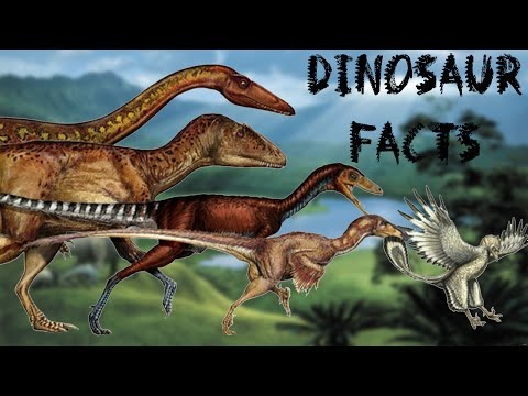 Top 10 Facts About Dinosaurs