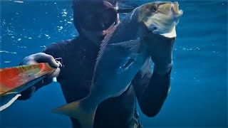 Spearfishing South Crete -Seabass/Octapus/Dentice