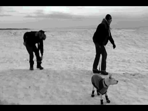 Single Ladies of Antarctica