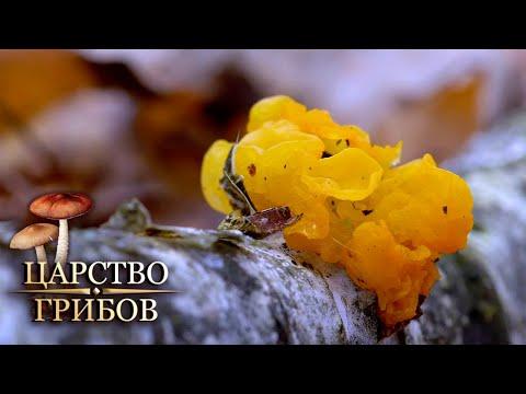 Необычные грибы. Царство грибов @Моя Планета