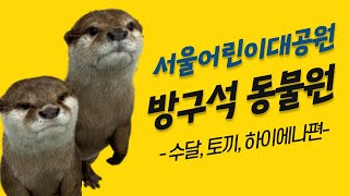 서울어린이대공원 방구석 동물원 - 수달, 토끼, 하이에나편썸네일