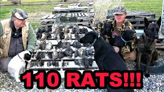 Rats DESTROYED by Mink and Dogs!