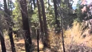 BIGFOOT sighting in Big Bear CA