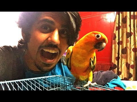 GOT A NEW DANCING PET | ADOPTED BUDDY | Wildly Indian