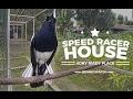 Kacer Gopro Hero  Magpie Robin Singing Speed Racer House Pancingan Suara Joki Madu Adry Riady  Mp3 - Mp4 Download