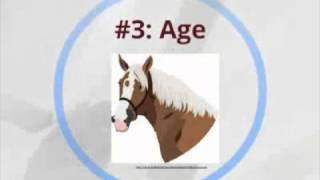 a good horse f๐r a beginner