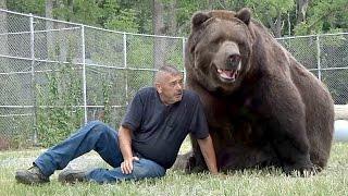 Про дружбу человека и медведя (новости)(http://ntdtv.ru/ Про дружбу человека и медведя. Джим Ковальчик знает всё о том, что такое крепкие медвежьи объятия...., 2016-10-14T11:19:04.000Z)